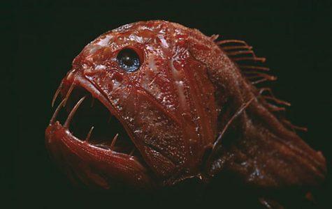 The Weirdest Fish That You'll Never Catch