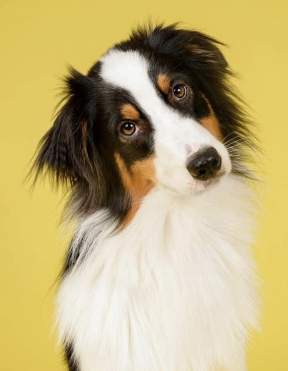 Migraine Detecting Dogs?